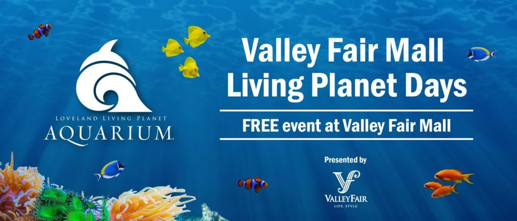 Valley Fair hosts Living Planet Aquarium for summer educational fun