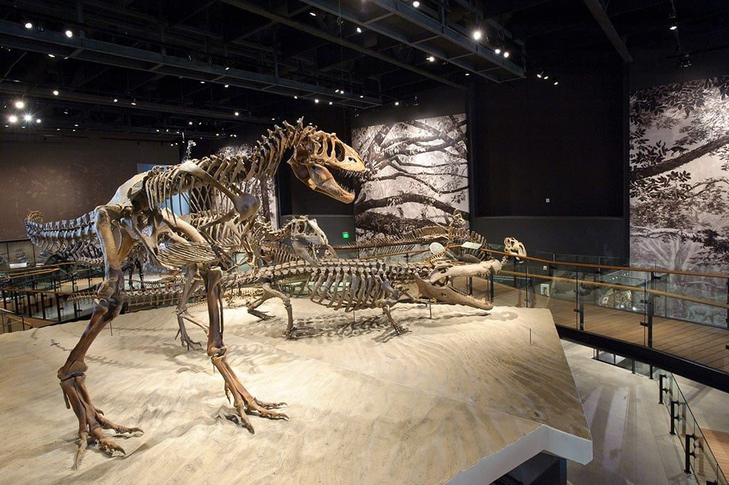 Dinosaur exhibit (NHMU)